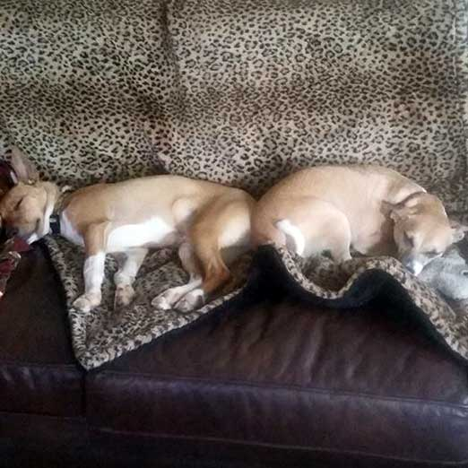 Judy Howell's dogs - Buddy and ?