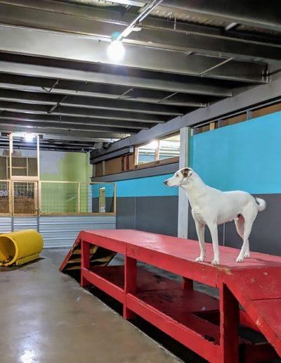 Indoor Play Area #7