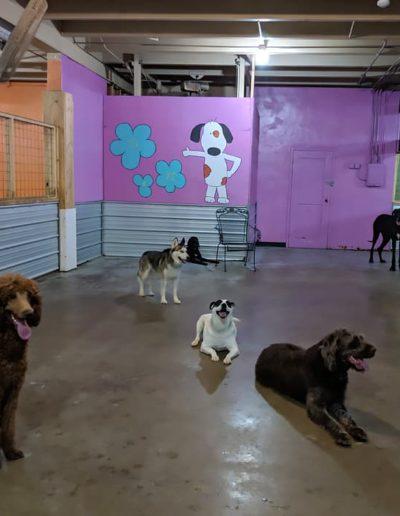 Indoor Play Area #8